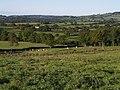 Six Acre Plantation - geograph.org.uk - 561897.jpg