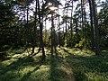 """Skoven ved den """"Kunstige"""" - panoramio.jpg"""