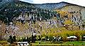 Snowy Aspens - panoramio.jpg