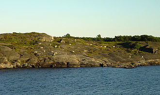 Åland Islands - Sheep grazing on a small island.