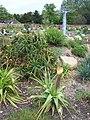 South Africa - Part of Lullingstone World Garden - geograph.org.uk - 1101804.jpg