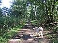 Speeding Dog - geograph.org.uk - 220838.jpg