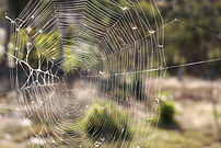 Web showing various insects caught within