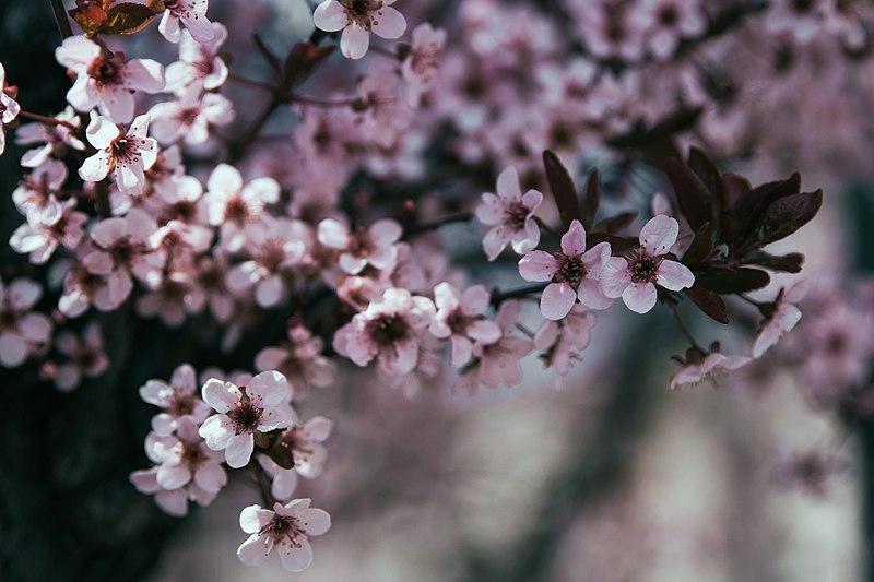 File:Spring (Unsplash 118HMzX-i 8).jpg