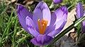 Spring in Botanic Garden Cluj-Napoca (3375391243).jpg