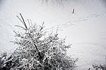 Spuren im Schnee Tracks in the snow (8404663187).jpg