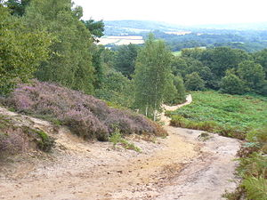 The Ramblers - the Pilgrims' Way climbs St Martha's Hill, on the North Downs, Surrey