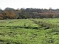 Standlynch Meadows - geograph.org.uk - 281809.jpg