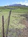 Starr-040518-0101-Cynodon dactylon-view exclosure-Puhilele HNP-Maui (24584969212).jpg