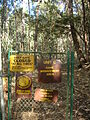 Starr 051224-5903 Eucalyptus sp..jpg
