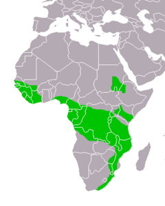 Stephanoaetus coronatus distribution map small 2.png