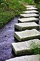 Stepping Stone (181033391).jpeg