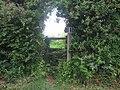 Stile in hedge on Tile Lodge Road - geograph.org.uk - 1325570.jpg