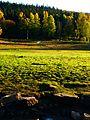 Strange Green - panoramio.jpg
