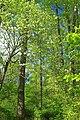 Streamside Hike (2) (14032149287).jpg