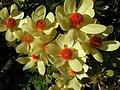 Strybing Arboretum - Flower8.JPG