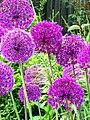 Summer Garden.jpg