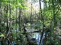 Swamp in judarsskogen.JPG