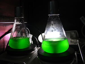 Microbiological culture - Liquid cultures of cyanobacterium Synechococcus PCC 7002