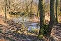 Tůně v NPR Bohdanečský rybník 06.jpg