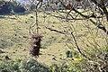 TACHOS - panoramio.jpg
