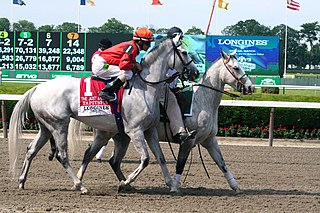 Tapitsfly American-bred Thoroughbred racehorse