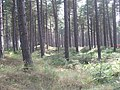 Tentsmuir Forest - geograph.org.uk - 1434622.jpg