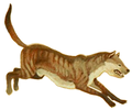 Tephrocyon (white background).png