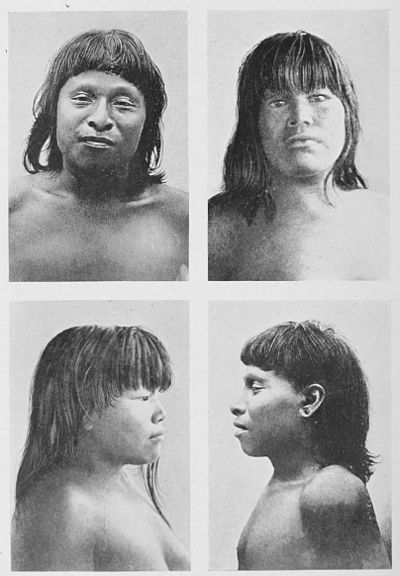The American Indian Fig 90.jpg