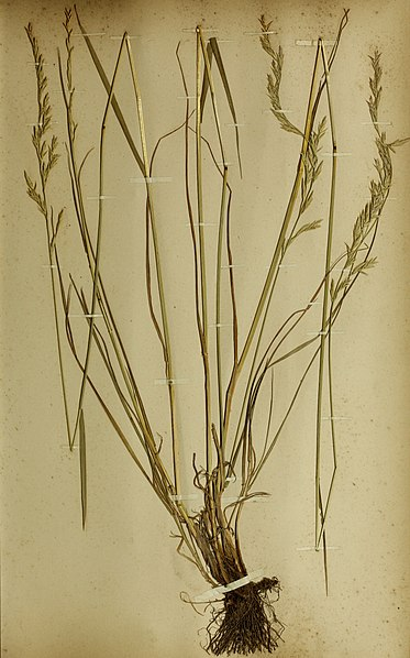 File:The British farmer's plant portfolio - specimens of the principal British grasses, forage plants and weeds - with full descriptions (1896) (14593260390).jpg