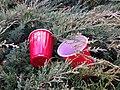 The Bushes Are Flowering (15577760318).jpg