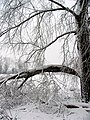 The Effects of Winter, Woolhampton - geograph.org.uk - 333369.jpg