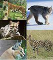 The Felidae 2.jpg