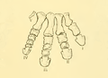 The Osteology of the Reptiles-209 dfg ghj dertg ftgy vfghg fgh t gt.png