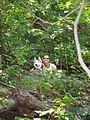 The Pallisades Interstate Park, New Jersey. August 2008 - panoramio - Gary Miotla (4).jpg