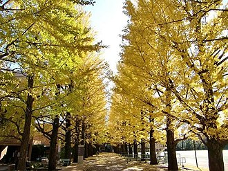 Suginami - Autumn colors in a High School Suginami