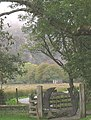 The lyre that turned out to be fish - geograph.org.uk - 266201.jpg
