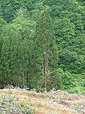 Three Tree - panoramio.jpg