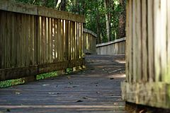 Photograph of part of the boardwalk at Tibet-Butler Preserve