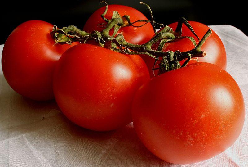 http://upload.wikimedia.org/wikipedia/commons/thumb/3/3b/Tomate_2008-2-20.JPG/800px-Tomate_2008-2-20.JPG