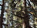 Tongass National Forest 541.jpg