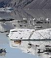 Tour boat among the icebergs on Tasman Lake.jpg