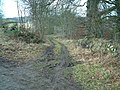 Track through Willandale plantation - geograph.org.uk - 111679.jpg