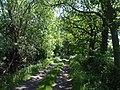 Track to Smallhedge Farm - geograph.org.uk - 1332867.jpg