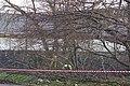 Tree Fellers ... No, Just Two ... Hillsborough, Sheffield - geograph.org.uk - 1086478.jpg