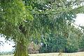 Tree at Bald Peak.jpg