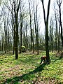 Tree felling, Cobham Frith (5) - geograph.org.uk - 1265354.jpg