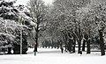 Trees (5278017274).jpg