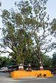 Trees - Pokhara, Nepal - panoramio.jpg