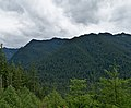 Trees covered mountains in Clearwater Wilderness, WA.jpg
